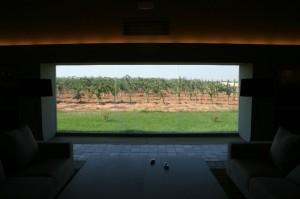 Vista de los viñedos desde el interior