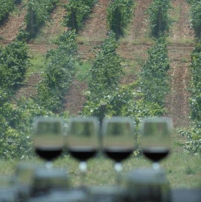 Sala de catas con vistas al viñedo