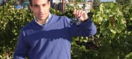 El doctor Pablo Orío, director del Dpto. I+D+i de Bodegas Riojanas, muestra un racimo de la variedad mazuelo en la finca Viña Albina, propiedad de la bodega y situada en los límites urbanos de Cenicero, en pleno corazón de La Rioja Alta.