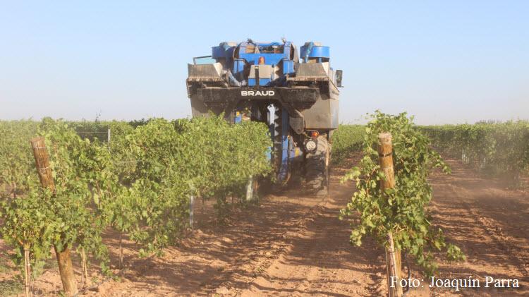 Cambios reglamentarios para afrontar la campaña 2021 en el sector del vino