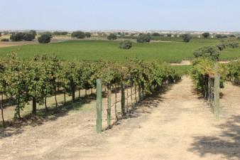 Viñedos de Bodega Dehesa de Luna en La Roda - Albacete