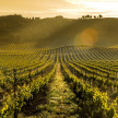 Pago de Carraovejas, uno de los 100 mejores viñedos del mundo
